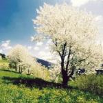 4 ville in fiore in Val di Non