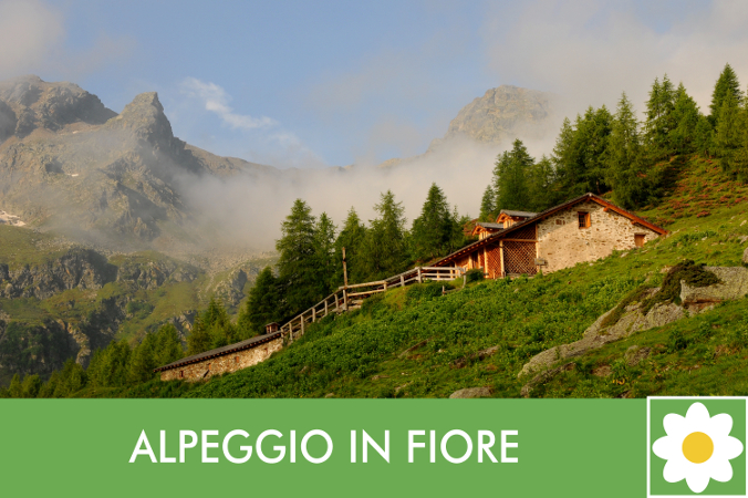 Pacchetto vacanza Alpeggio in Fiore